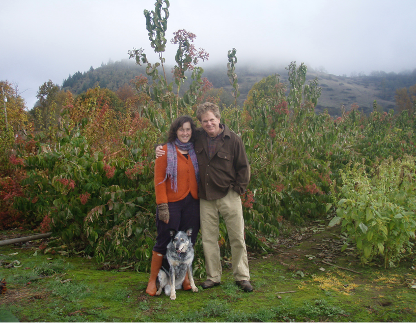a photo of a couple with a dog in an overcast rolling hill landscape