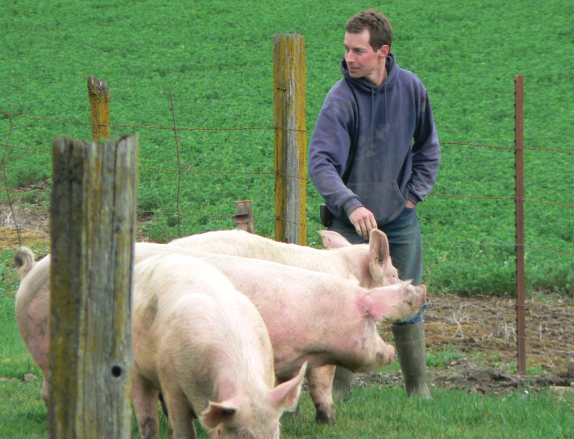 a man tending to his three pigs