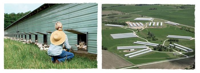 Smart Chicken Farm Image
