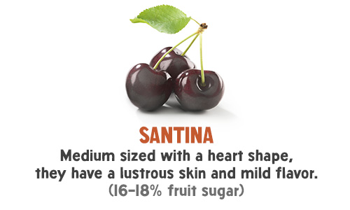 Santina - Medium sized with a heart shape, they have a lustrous skin and mild flavor. (16-18% fruit sugar)