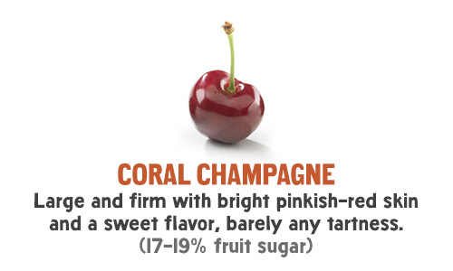 Coral Champagne - Large and firm with bright pinkish-red skin and a sweet flavor, barely any tartness. (17-19% fruit sugar)