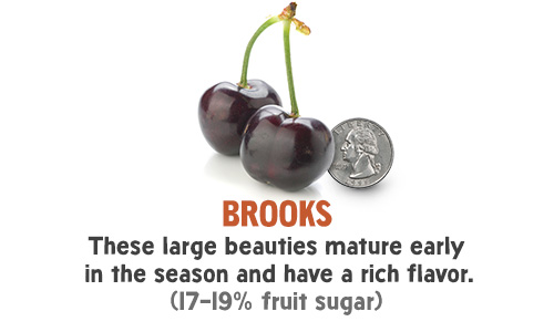 Brooks - These large beauties mature early in the season and have a rich flavor. (17-19% fruit sugar)